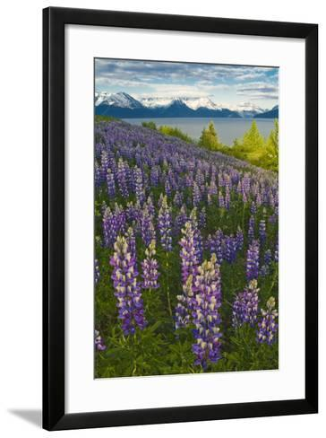 Scenic View of Turnagain Arm and Chugach Mountains Near Bird Point with Lupine Meadow-Design Pics Inc-Framed Art Print