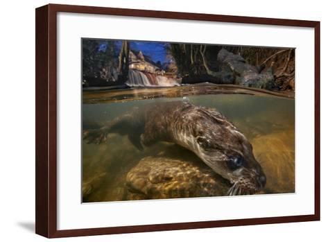 A Female Otter Searches for Prey-Charlie Hamilton James-Framed Art Print