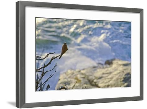 A Raptor on the Coast, Cape Town, South Africa-Keith Ladzinski-Framed Art Print