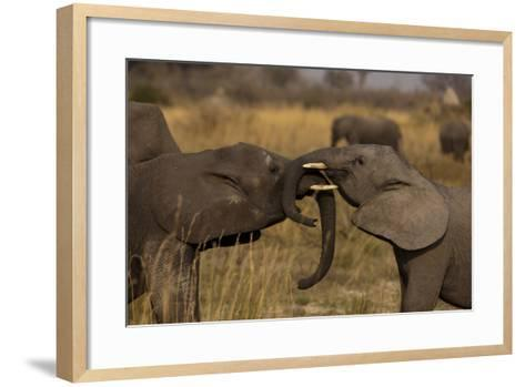 Two Young Elephants Play Sparring in Northern Botswana-Beverly Joubert-Framed Art Print