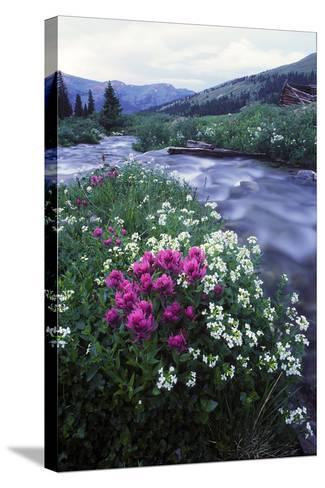 Wildflowers Next to a Stream in Arapahoe National Forest-Keith Ladzinski-Stretched Canvas Print