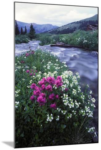 Wildflowers Next to a Stream in Arapahoe National Forest-Keith Ladzinski-Mounted Photographic Print