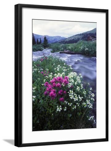 Wildflowers Next to a Stream in Arapahoe National Forest-Keith Ladzinski-Framed Art Print