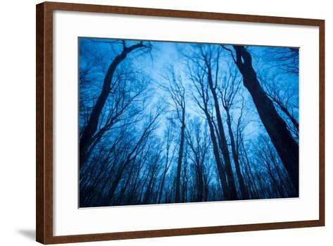 A Grove of Trees in Sleeping Bear Dunes National Lakeshore on the East Side of Lake Michigan-Michael Melford-Framed Art Print