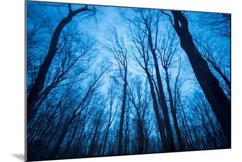 A Grove of Trees in Sleeping Bear Dunes National Lakeshore on the East Side of Lake Michigan-Michael Melford-Mounted Photographic Print