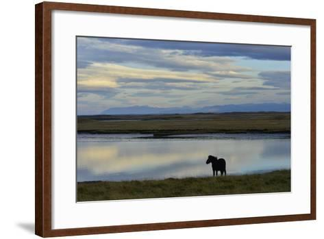 An Icelandic Horse Stands Along the Shore at Low Tide-Raul Touzon-Framed Art Print