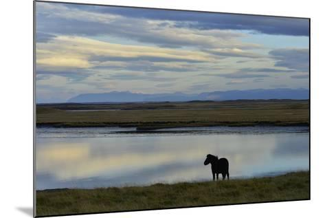 An Icelandic Horse Stands Along the Shore at Low Tide-Raul Touzon-Mounted Photographic Print