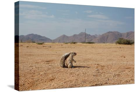 A Cape Ground Squirrel, Xerus Inures, on the Look Out in Solitaire, Namibia-Alex Saberi-Stretched Canvas Print