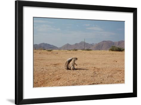A Cape Ground Squirrel, Xerus Inures, on the Look Out in Solitaire, Namibia-Alex Saberi-Framed Art Print