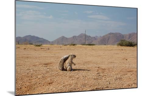 A Cape Ground Squirrel, Xerus Inures, on the Look Out in Solitaire, Namibia-Alex Saberi-Mounted Photographic Print