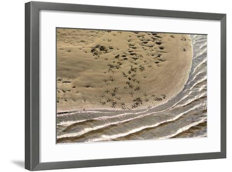 Heron Tracks on a Sandbar in the Kouchibouguac River-Darlyne A^ Murawski-Framed Art Print