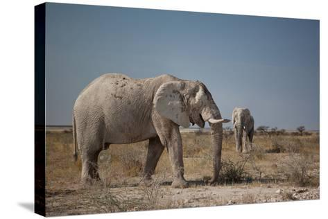 Two Bull Elephants in Etosha National Park, Namibia-Alex Saberi-Stretched Canvas Print