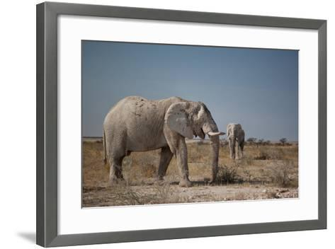 Two Bull Elephants in Etosha National Park, Namibia-Alex Saberi-Framed Art Print