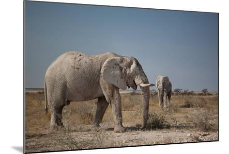 Two Bull Elephants in Etosha National Park, Namibia-Alex Saberi-Mounted Photographic Print