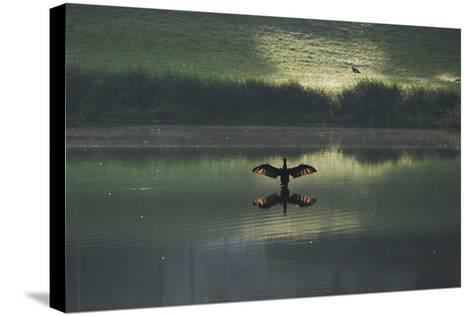 A Cormorant (Phalacrocorax Auritus) Stretches its Wings to Dry Them During Sunrise-Alex Saberi-Stretched Canvas Print