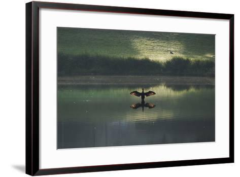 A Cormorant (Phalacrocorax Auritus) Stretches its Wings to Dry Them During Sunrise-Alex Saberi-Framed Art Print