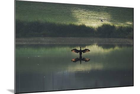 A Cormorant (Phalacrocorax Auritus) Stretches its Wings to Dry Them During Sunrise-Alex Saberi-Mounted Photographic Print