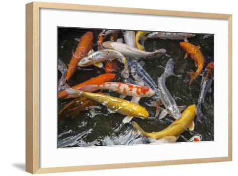 Koi at the Taronga Zoo-Joel Sartore-Framed Art Print