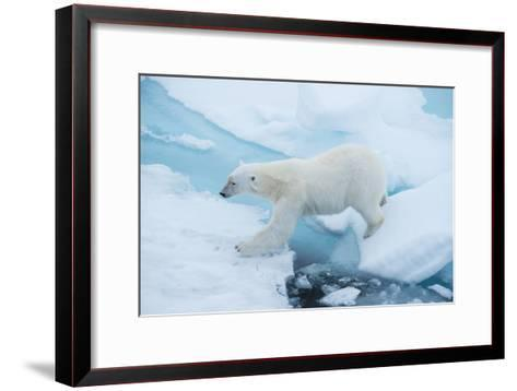 A Polar Bear Steps from One Chunk of Drift Ice to Another-Michael Melford-Framed Art Print