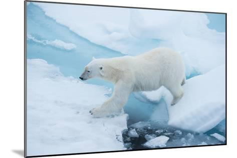 A Polar Bear Steps from One Chunk of Drift Ice to Another-Michael Melford-Mounted Photographic Print