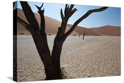 The Dead Acacia Trees of Deadvlei at Sunrise-Alex Saberi-Stretched Canvas Print