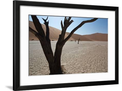 The Dead Acacia Trees of Deadvlei at Sunrise-Alex Saberi-Framed Art Print