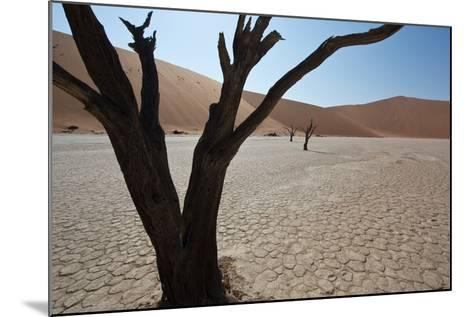 The Dead Acacia Trees of Deadvlei at Sunrise-Alex Saberi-Mounted Photographic Print