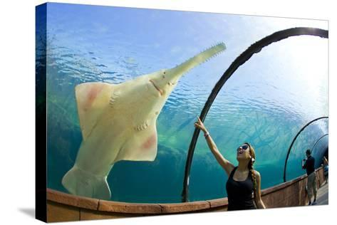 A Woman Points to a Carpenter Shark, or Sawfish, Swimming over an Underwater Tunnel-Mike Theiss-Stretched Canvas Print