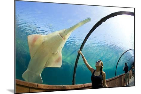 A Woman Points to a Carpenter Shark, or Sawfish, Swimming over an Underwater Tunnel-Mike Theiss-Mounted Photographic Print
