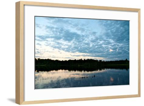 A Mallard Duck and Her Ducklings Swimming in a Pristine Lake at Sunrise-Heather Perry-Framed Art Print