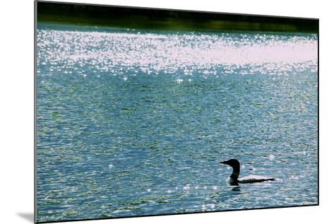 A Common Loon, Gavia Immer, Swimming in a Lake Shimmering with Reflections of Sunlight-Heather Perry-Mounted Photographic Print