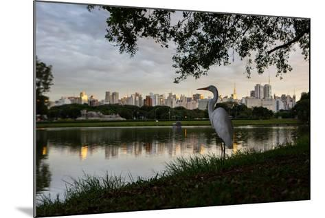 A Great Egret Looks Out over a Lake in Sao Paulo's Ibirapuera Park-Alex Saberi-Mounted Photographic Print