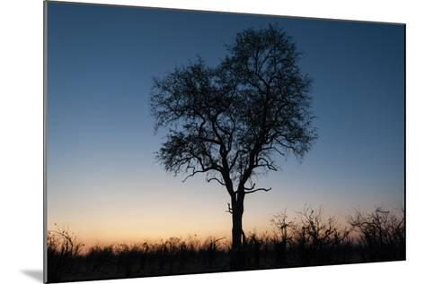 A Silhouetted Tree at Dusk in the Okavango Delta-Sergio Pitamitz-Mounted Photographic Print