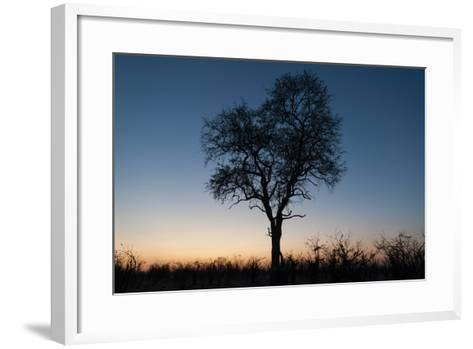 A Silhouetted Tree at Dusk in the Okavango Delta-Sergio Pitamitz-Framed Art Print