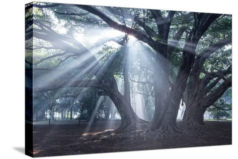 The Sun's Rays Shine Through Trees in Mist in Ibirapuera Park-Alex Saberi-Stretched Canvas Print