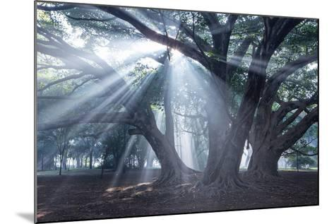 The Sun's Rays Shine Through Trees in Mist in Ibirapuera Park-Alex Saberi-Mounted Photographic Print
