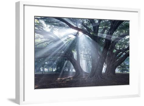 The Sun's Rays Shine Through Trees in Mist in Ibirapuera Park-Alex Saberi-Framed Art Print