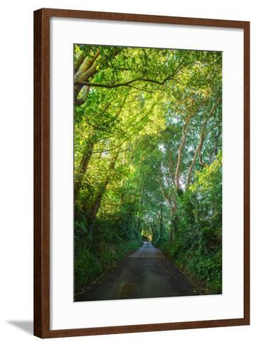 Sunlight Filters Through a Canopy of Branches over a Country Lane Near the Village of Winchelsea-Roff Smith-Framed Art Print