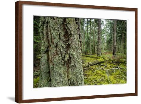 A Grove of Trees in the San Juan Islands-Michael Melford-Framed Art Print