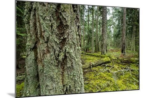 A Grove of Trees in the San Juan Islands-Michael Melford-Mounted Photographic Print