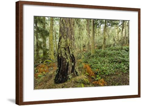 A Grove of Trees in the San Juan Islands-Michael Melford-Framed Art Print
