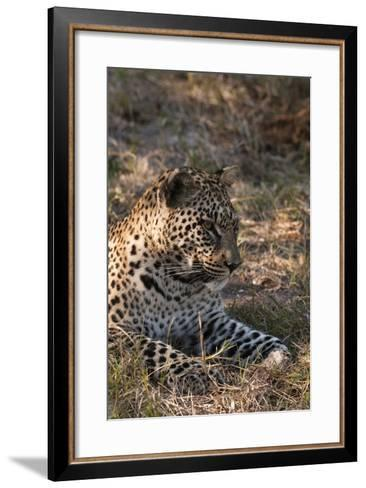Portrait of a Leopard, Panthera Pardus, Resting-Sergio Pitamitz-Framed Art Print