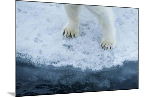 A Close Up of Polar Bear Front Feet and Legs, Standing on the Edge of Drift Ice-Michael Melford-Mounted Photographic Print