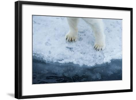 A Close Up of Polar Bear Front Feet and Legs, Standing on the Edge of Drift Ice-Michael Melford-Framed Art Print