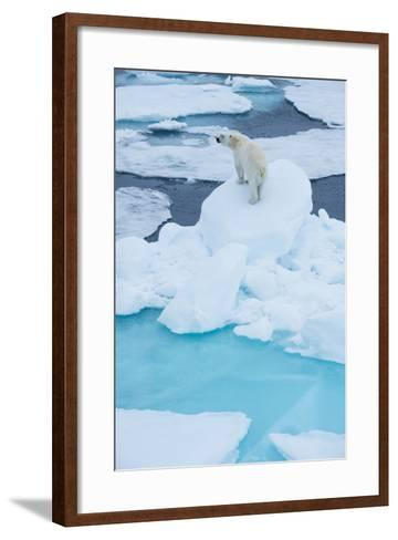 A Wary Polar Bear Mounted on Top of a Boulder of Drift Ice-Michael Melford-Framed Art Print