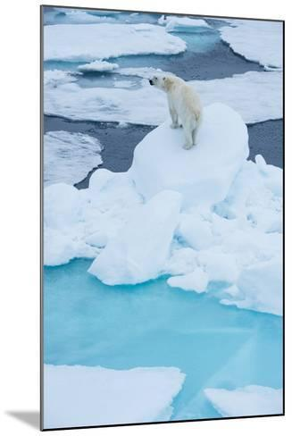 A Wary Polar Bear Mounted on Top of a Boulder of Drift Ice-Michael Melford-Mounted Photographic Print