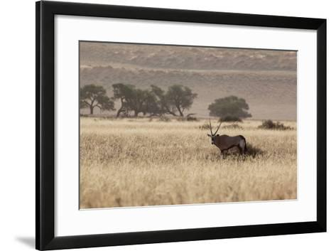 An Orix Grazing in the Namib-Naukluft National Park at Sunset-Alex Saberi-Framed Art Print