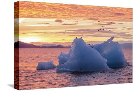 Blue Glacial Ice Floating at Sunset with Gulls-Rich Reid-Stretched Canvas Print