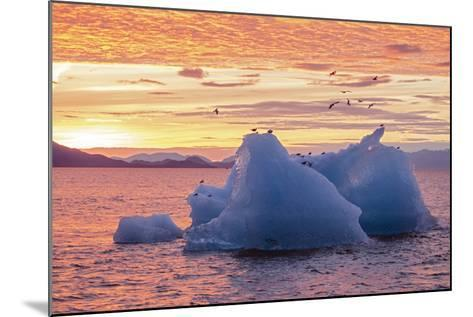 Blue Glacial Ice Floating at Sunset with Gulls-Rich Reid-Mounted Photographic Print