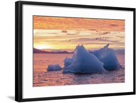 Blue Glacial Ice Floating at Sunset with Gulls-Rich Reid-Framed Art Print